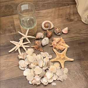 Other - Seashell Lot